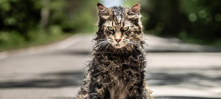 Sitges and Paramount invite you to the preview of 'Pet Sematary'